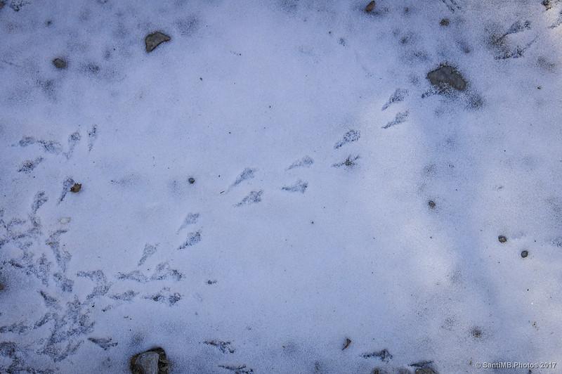 Pisadas de pájaro en la nieve