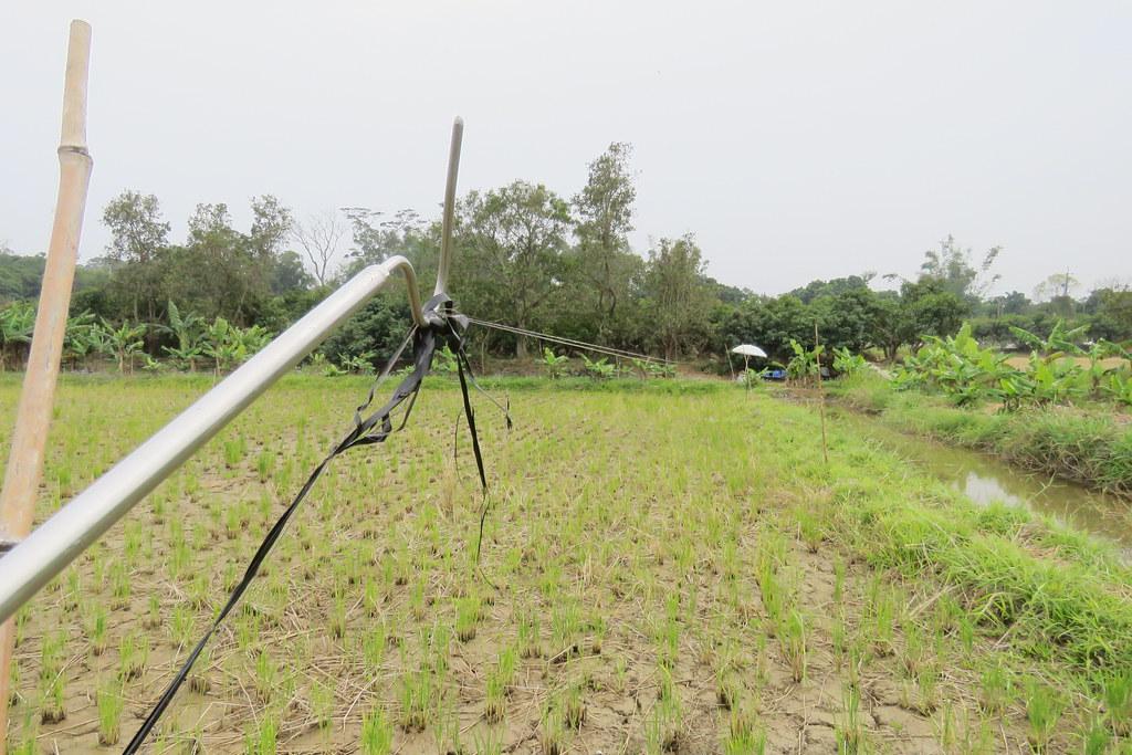 農民使用的驅鳥繩過細、不易發現,造成鳥類致命。照片提供:高雄市野鳥學會