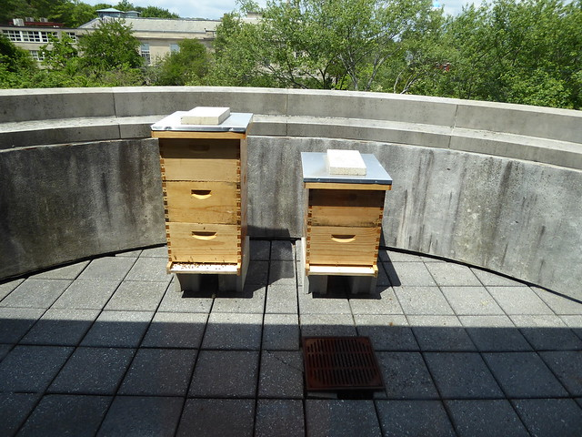 bee hives - Robbins Library, Arlington MA