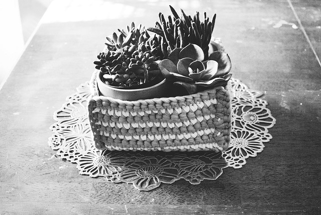 Succulents in a crochet basket