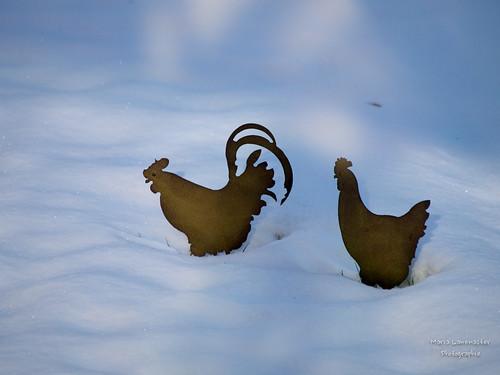 Zwei Hühner im Schnee