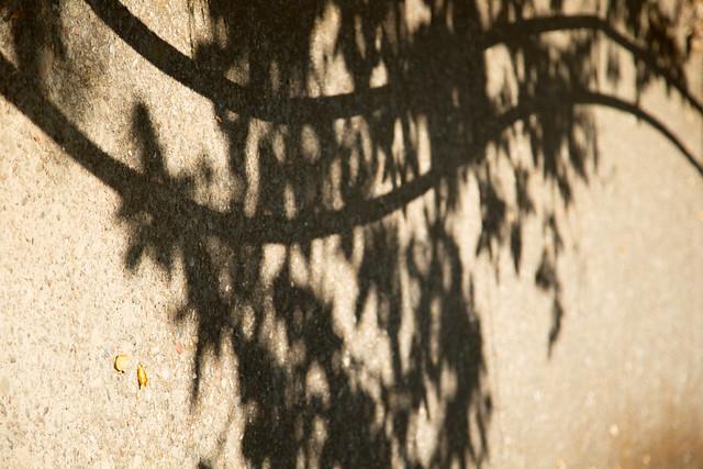 Garden - Shadow Music