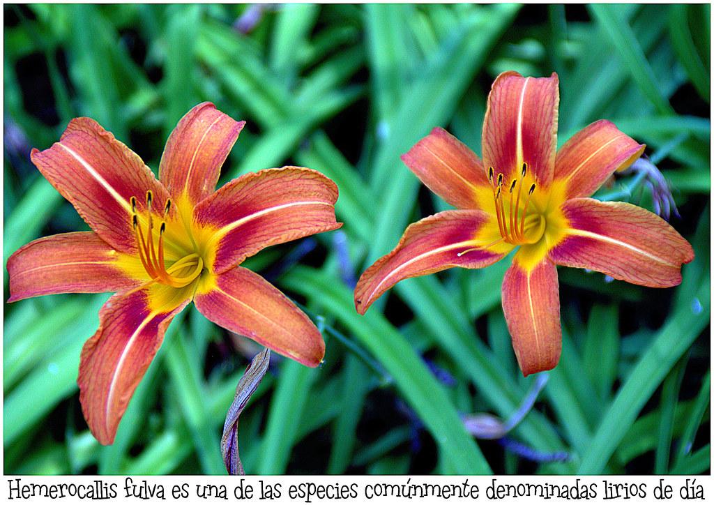 Verano en los Jardines de Aranjuez