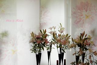テーマ 「川崎景太の花世界 「花のメッセージ」」