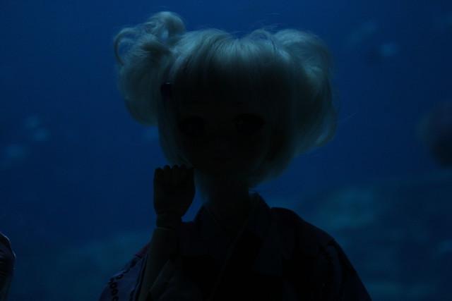 dd aquarium 9