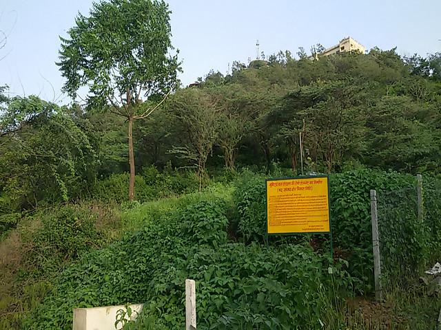 मन्दिर के चारों तरफ छाई हरियाली