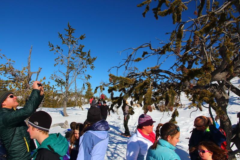 IMG_9156 Ranger-Led Snowshoe Walk