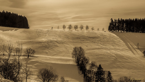 tree row