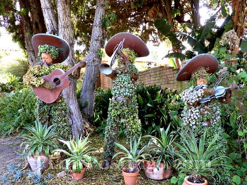 mariachi topiaries 1