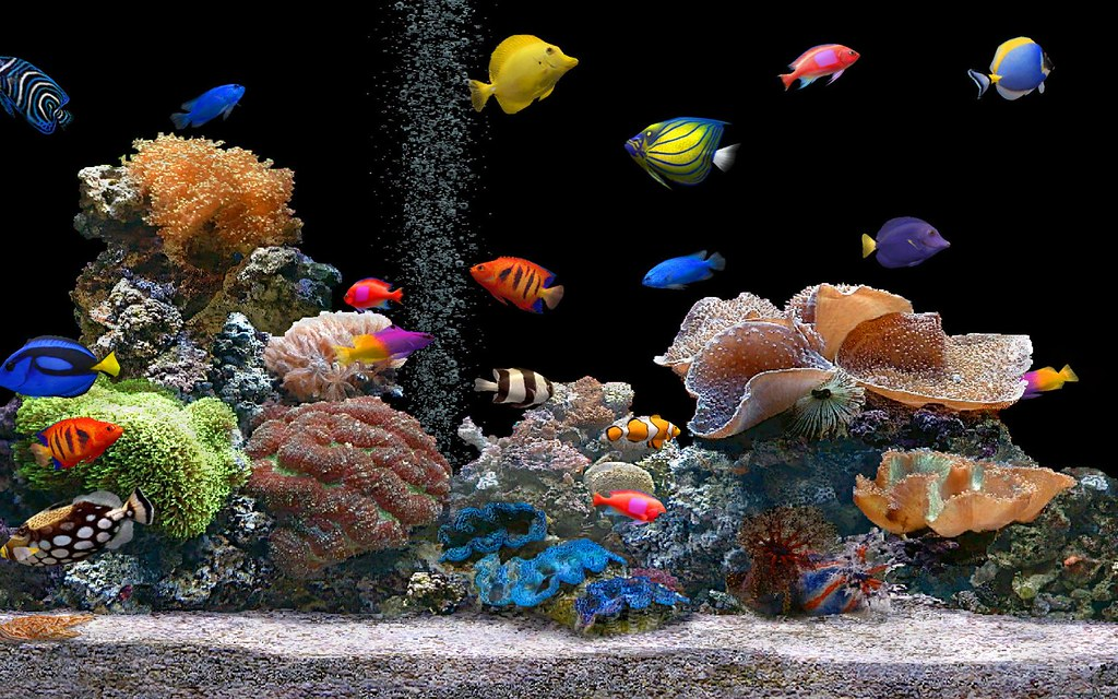 Enchanting Free Moving Fish Wallpapers For Desktop