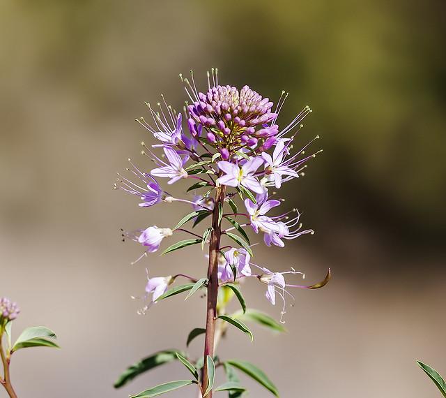 Wild Flower 20d_1897