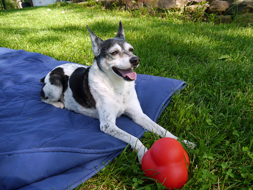 2015-06-28 - Outside with the Dogs - 0044 [flickr]