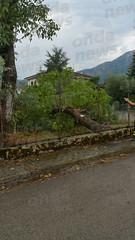 albero caduto sant'arsenio