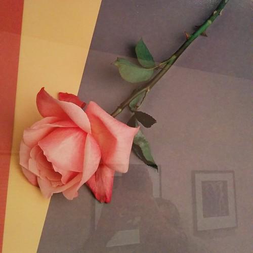 Rose, 1987