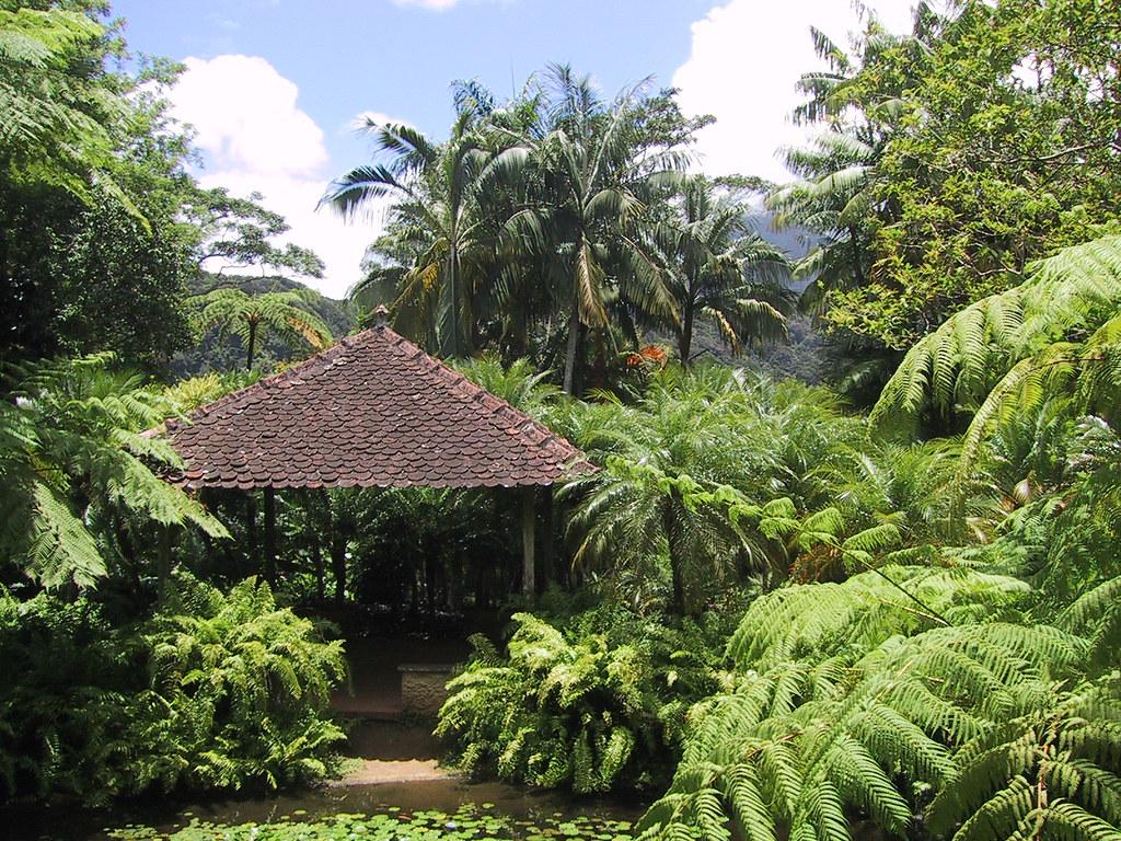 Martinique jardins de balata a walk through the for Jardin balata
