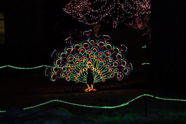 lights before christmas toledo zoo by heidigoseek - Toledo Zoo Lights Before Christmas