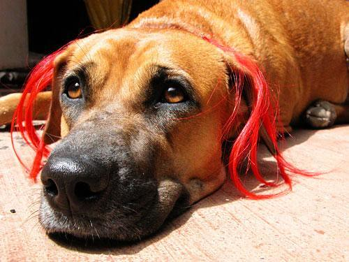 how to get rid of static hair on dogs