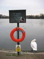 banksy and swan in hyde park by katenadine