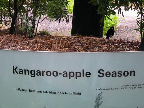 Kangaroo And Apple Addiction Dog Food Calorie Content