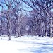 winter_trees_color_bluehue
