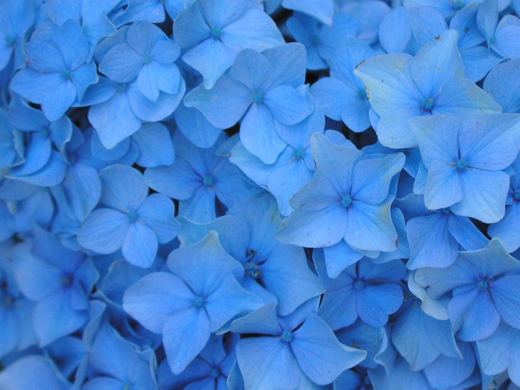 картинки голубой: