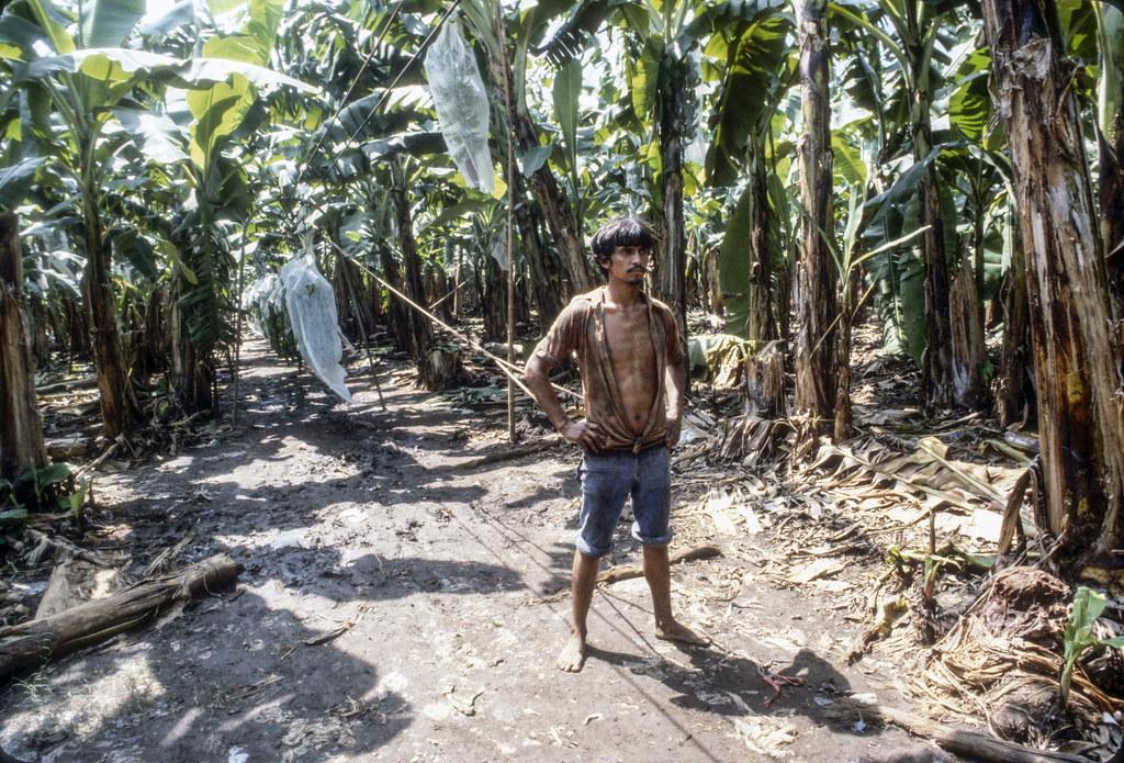 Dole Banana Plantation, Nicaragua, 79 | by Marcelo  Montecino