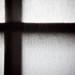 shoji_abstract