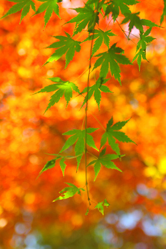 leaves | by jinx