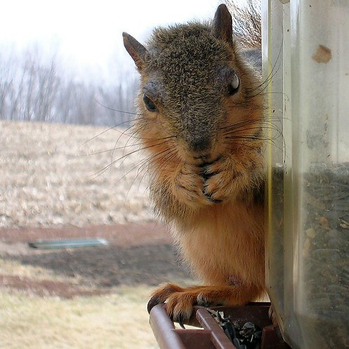 The 1 Eyed Squirrel Returns | by TomLA