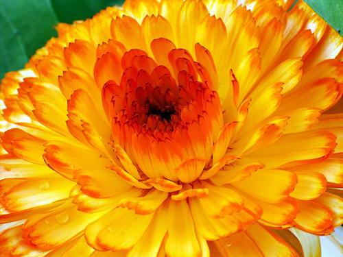 Bright yellow flower russ morris flickr bright yellow flower by rustman bright yellow flower by rustman mightylinksfo