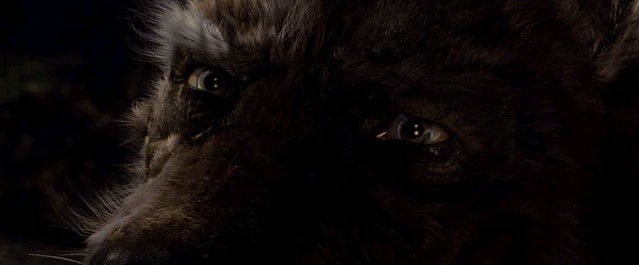 Wolf human eyes | Narrow | Flickr | 639 x 265 jpeg 25kB