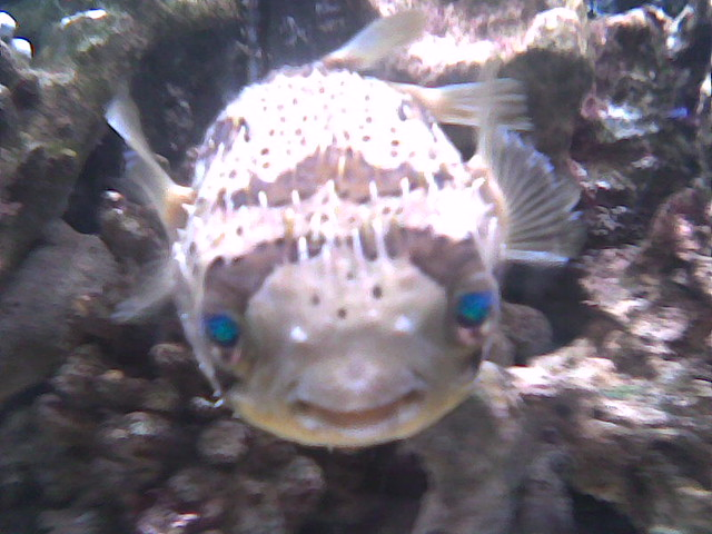 Scary blue eyed fish | At the London Aquatic Design Centre ...