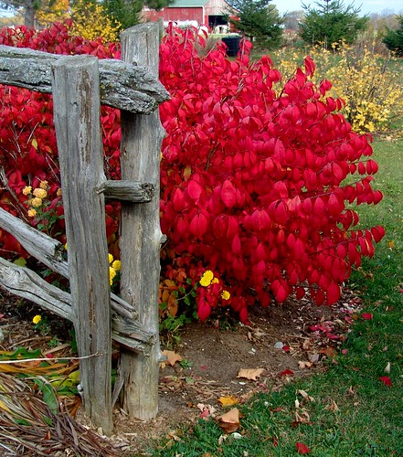 Burning Bush | by Light Collector