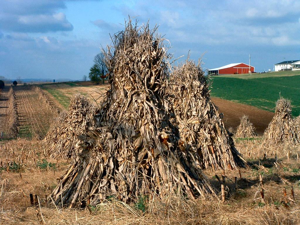 how to make corn shocks