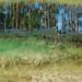 a meadows dream