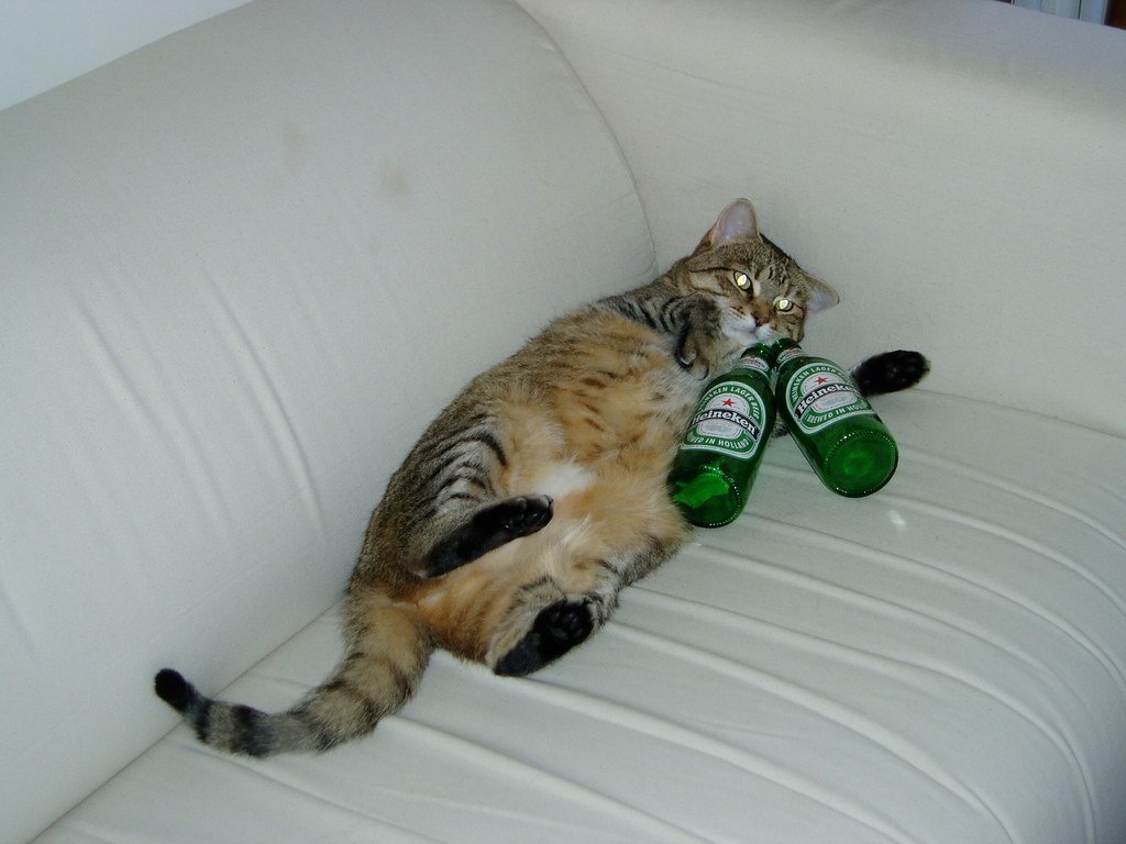 Fat Cat Calypso On The Couch With Beer 4 Courtney W May