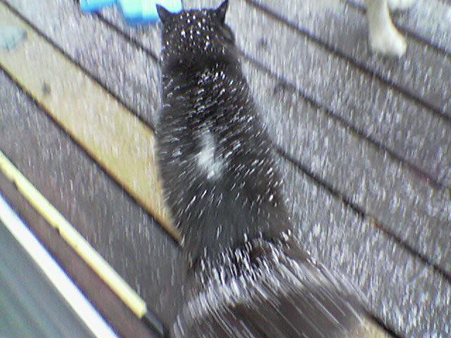 My Cat has Dandruff | C B | Flickr