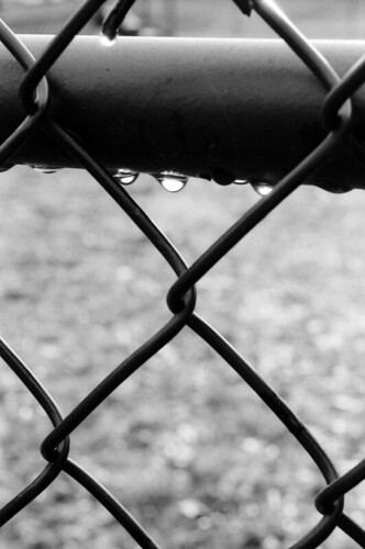 Raining Fence | by Brit.