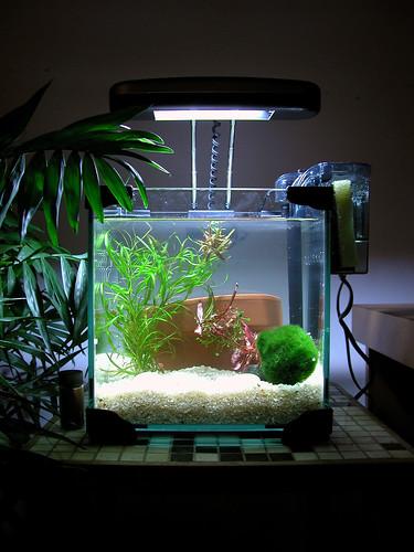 2gallon 20060129 01 nycbone flickr for Koi fish tank setup