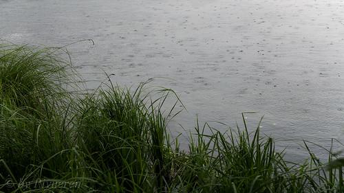 Sguardi sulla pioggia