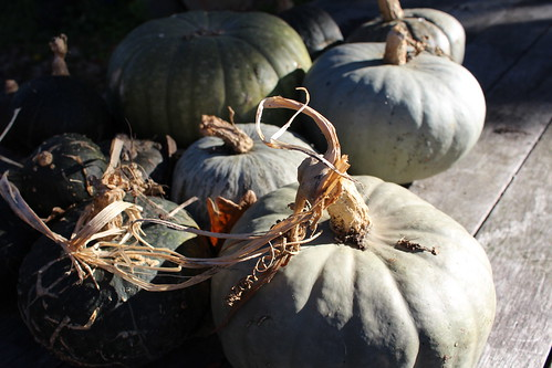 Self-sown Pumpkin