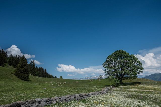 2015-06_Glarus-36