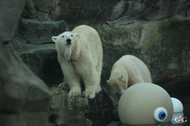 Besuch Zoo am Meer 30.12.201693