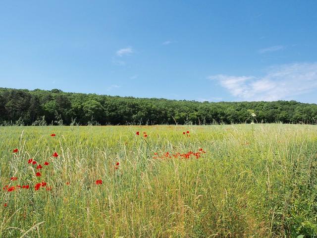 Beaune countryside