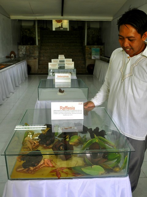 Museum of Natural History, NUEBG, Ilocos Norte