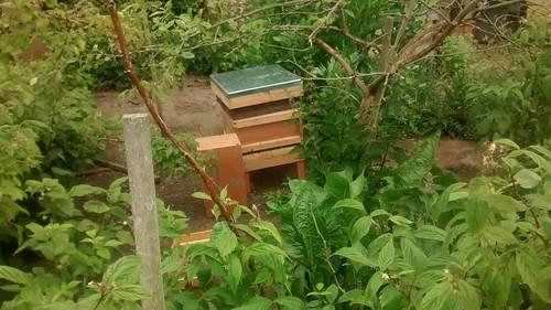 new hive June 15