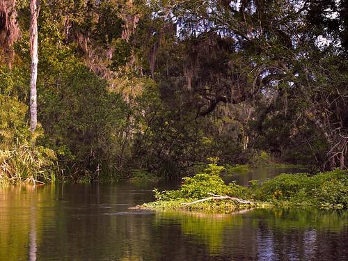 31976899565_6a283811a9 Ichetucknee Springs Florida Usa Map on wekiva springs florida map, myakka river florida map, devil's den florida map, ginnie springs campground map, ellisville florida map, hart springs florida map, paynes prairie florida map, ichetucknee river map, blue spring florida map, orange heights florida map, deer lake florida map, silver glen springs florida map, rainbow springs florida map, crystal springs florida map, weeki wachee springs map, manatee springs florida map, lake geneva florida map, econfina springs florida map, lochloosa lake florida map, vortex springs florida map,