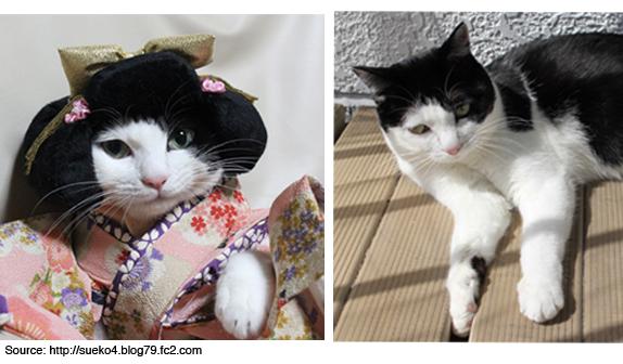 cat-transformed-7-3-15