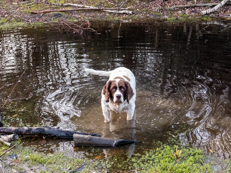 Max in the scuzzy pond