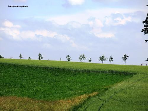 Trees on a hill in Feldbrunnen